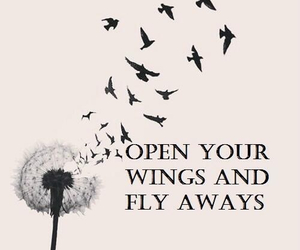 fly, bird, and wings image