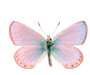 butterfly, overlay, and myedits image