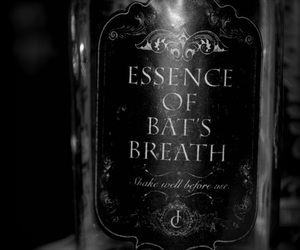 bats, essence, and black and white image