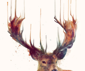 animal, deer, and picture image