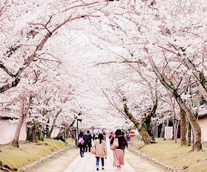 pink, cherry blossom, and japan image