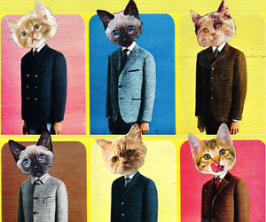 art, kitteh, and kittens image
