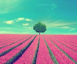 paradise, pink, and pretty image
