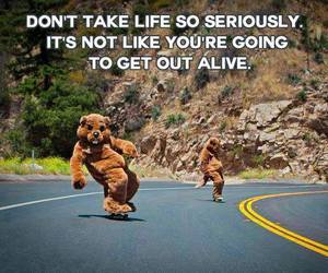 life, quote, and bear image
