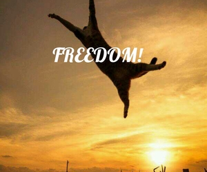 cat, freedom, and funny image