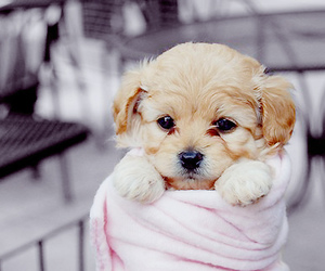 beautiful, puppy, and pink image