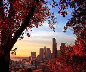 city, autumn, and tree image