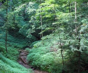forests, hiking, and nature image
