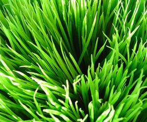 grass, green, and light image