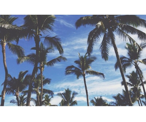 summer, fun, and palms image