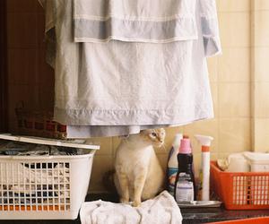 cat, vintage, and indie image