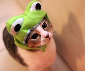 cute animals, frog, and cat image