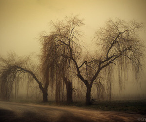 barren, sepia, and willow image