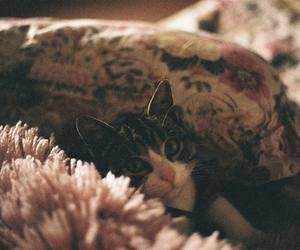 cat, hipster, and vintage image