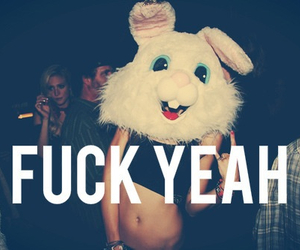 crazy, party, and rabbit image