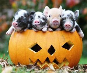Halloween, pig, and pumpkin image