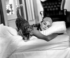 cat, audrey hepburn, and sleep image
