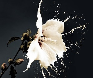 beauty, flower, and white image
