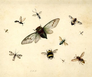 bee, insect, and drawing image
