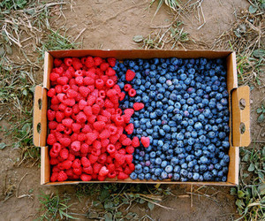 fruit, blueberry, and berries image