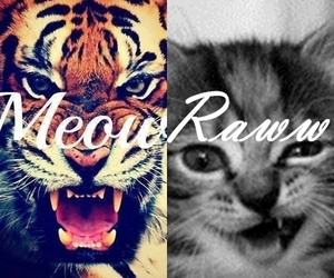 cat, meow, and tiger image