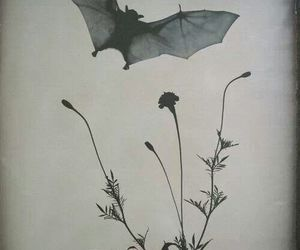 flowers, bat, and pic image
