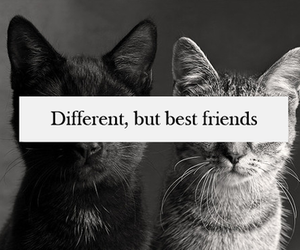 cats, friends, and diferent image