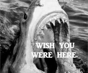 shark, wish, and funny image