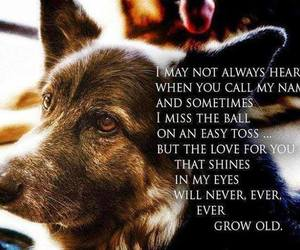 loyalty and luv image