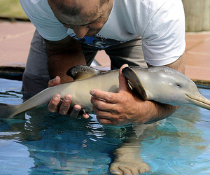 dolphin, animal, and baby image