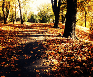 autumn, girly, and sweden image