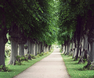 photography, beautiful, and trees image