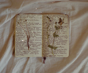photography, flowers, and book image