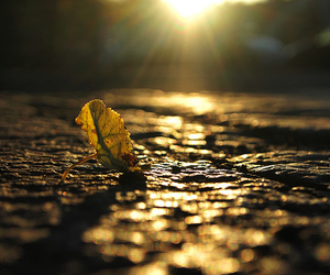 fall, sun, and golden image