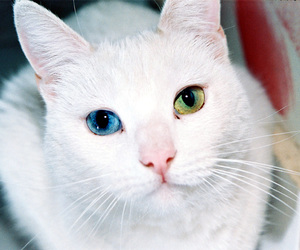 beutiful, cat, and cats image