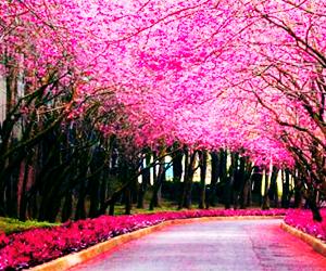 pink, beautiful, and tree image