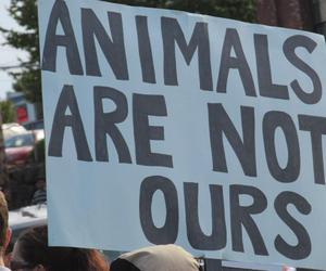alf, animal, and animals image
