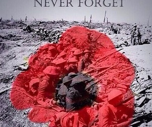 poppy and remembrance day image