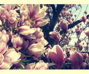 cherry blossoms, cross process, and photography image