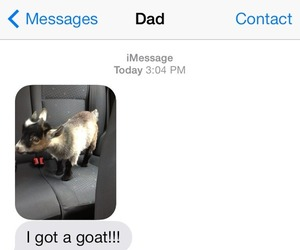 goat, dad, and funny image