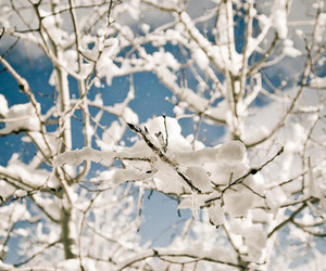photography, snow, and tree image