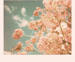 exposed, flowers, and sky image
