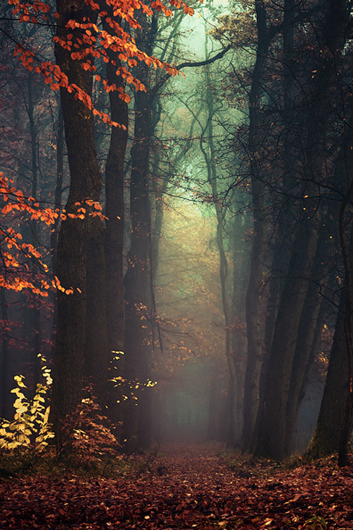 Fall Fall Fall Shared By Cassie On We Heart It