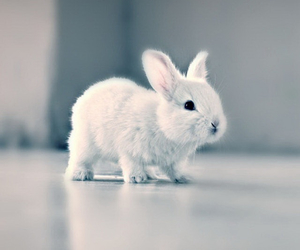 adorable, bunny, and cute image