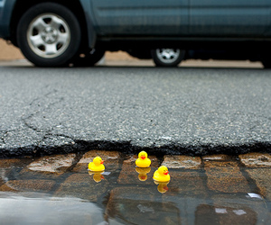 ducks, cute, and puddle image