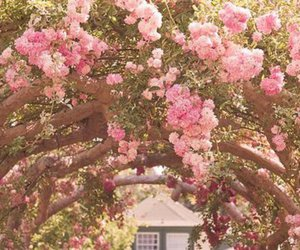 blossom, flower, and nature image