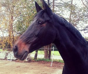 equestrian, cute, and horse image
