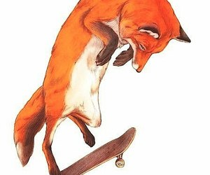 fox, skate, and art image