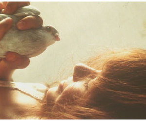 bird, gif, and vintage image
