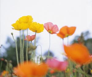 bokeh, botanic, and dof image
